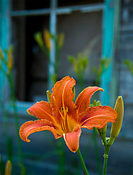 Orange-Lilly_Abandoned_Farm_House.jpg