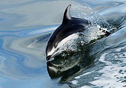 dolphin_web_final.jpg