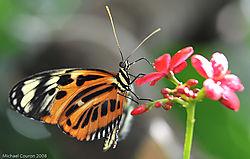 butterfly-11.jpg