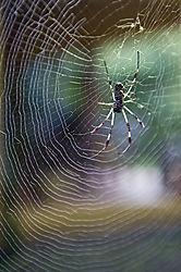 Spider-1-2.jpg