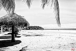 beach_umbrellas_bw_nik.jpg