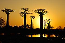 Baobab Alley, Madagascar