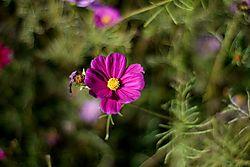 Flower2_A.jpg