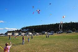 Kites-2.jpg