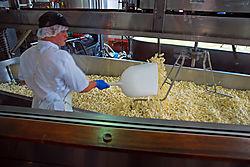 Making_Cheese.jpg