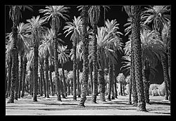 ir_furnace_creek_ranch_nik.jpg