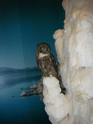 Owl1_IMGP1153