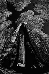 Clothes_Pin_Tree.jpg