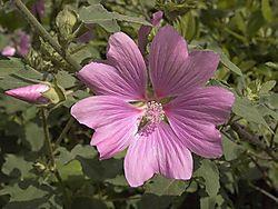 Purple_Flower_In_Paris.jpg