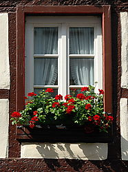 Window_1_pt.jpg