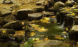 fern1.jpg