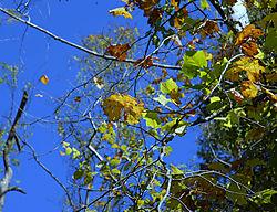 Autum_Leaf.jpg