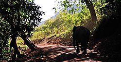 Forest_Traffic_Jam.jpg