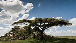 Tanzania_Trees-6.jpg