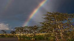 Tanzania_Trees-7.jpg