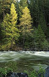Yosemite_013_2009.JPG