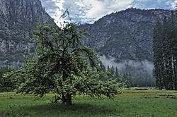 Yosemite_023_2009.JPG