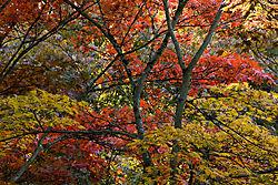 0710_UWA_Japanese_Grdn_127.jpg