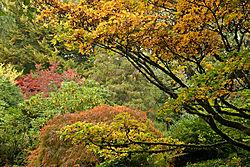 Kubota_Gardens_043.jpg