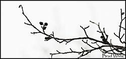 stick_nik.jpg