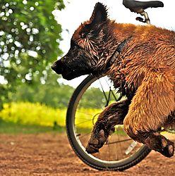 V-Bike.jpg