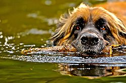 WaterLogged.jpg