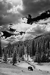 yellowstone-ir-5-small.jpg