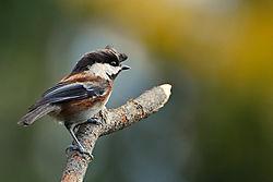 Bird-32.jpg