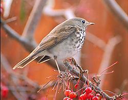 Bird_11.jpg