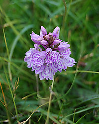 20_very_small_flower_on_isle_of_skye.jpg